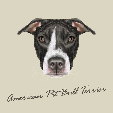 pit: Vector illustrated portrait of Dog on grey background Illustration