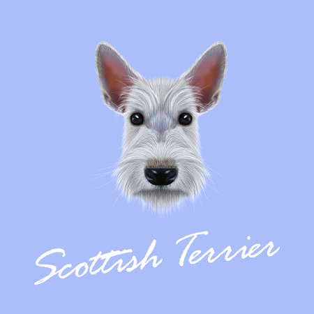 scottie: Vector Illustrated Portrait of Dog on blue background