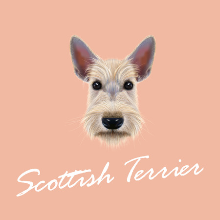aberdeen: Vector Illustrated Portrait of Dog on pink background