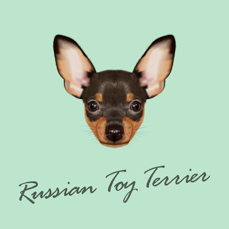 Vector Illustrated Portrait of small Dog on tan background