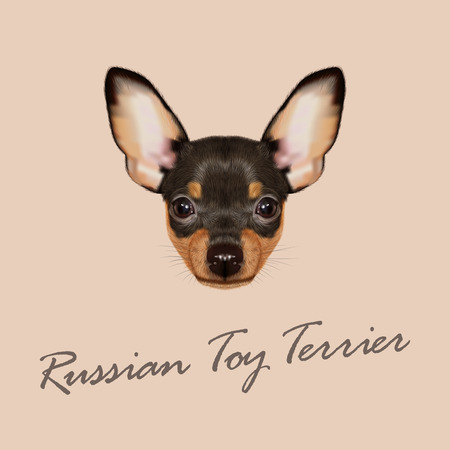 russkiy: Vector Illustrated Portrait of small Dog on green background Illustration