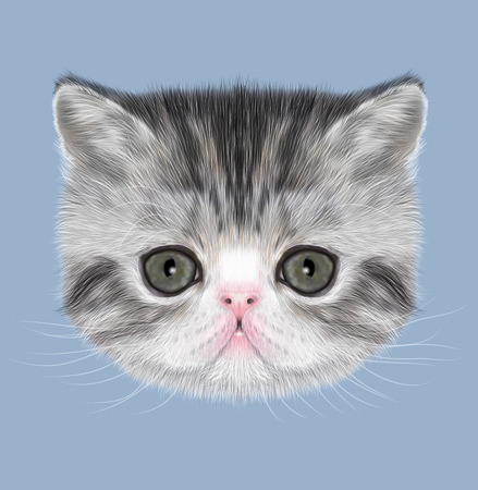 abyssinian: Illustrated Portrait of black tabby kitten on blue background Stock Photo