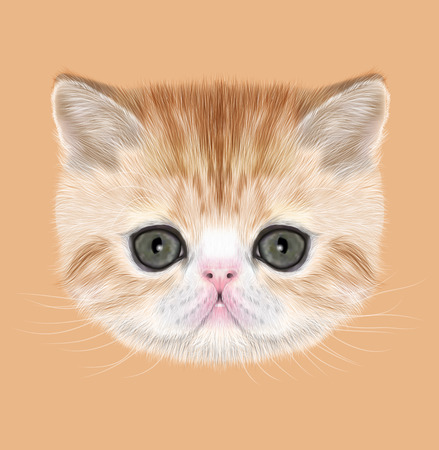abyssinian: Illustrated Portrait of red tabby kitten on orange background