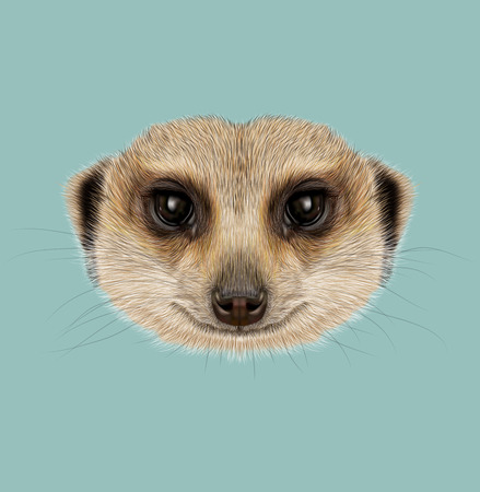 Illustrated Portrait of African Meerkat on blue background. Stock Photo
