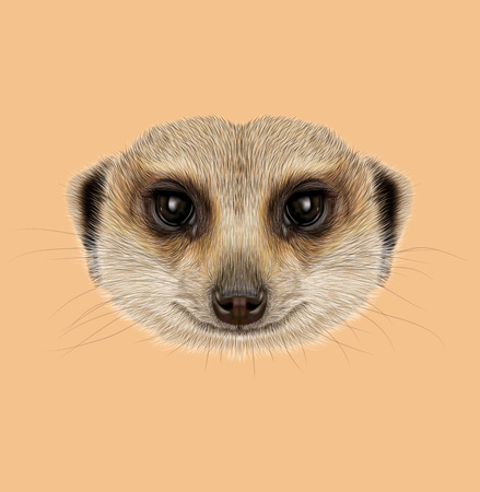 Illustrated Portrait of African Meerkat on tan background. Stock Photo