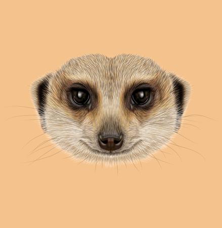 meerkat: Illustrated Portrait of African Meerkat on tan background. Stock Photo