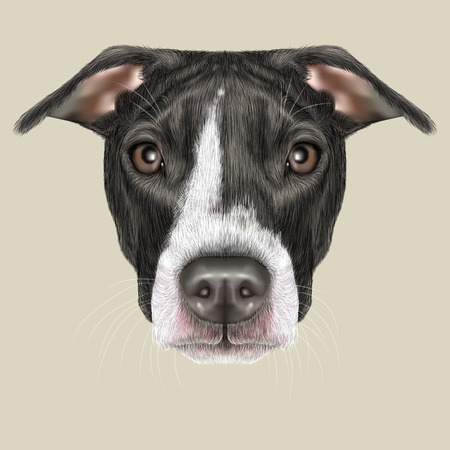 dog ear: Illustrated portrait of Dog on grey background. Stock Photo