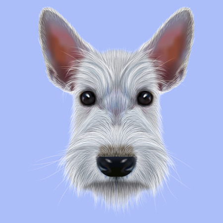 aberdeen terrier: Illustrated Portrait of Dog on blue background Stock Photo