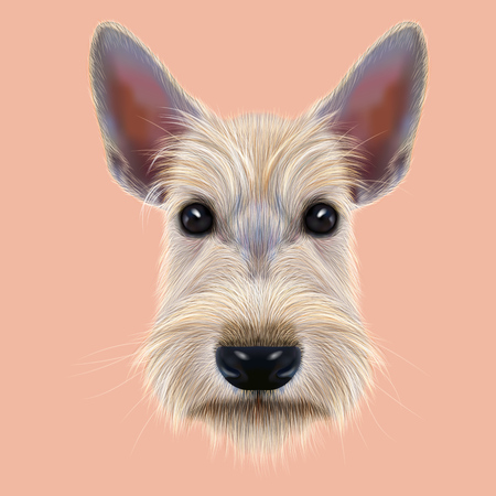 scottie: Illustrated Portrait of Dog on pink background