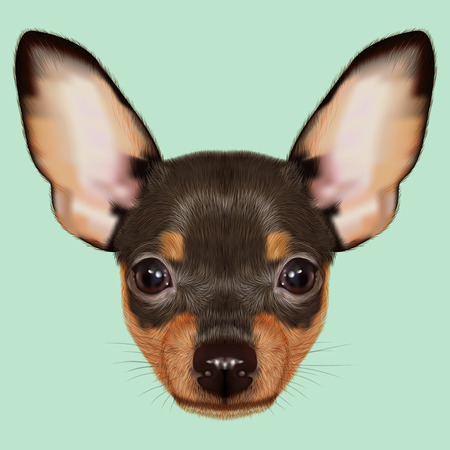 Illustrated Portrait of small Dog on green background
