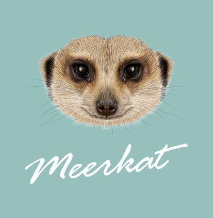 mongoose: Vector illustrated Portrait of Meerkat on blue background Illustration