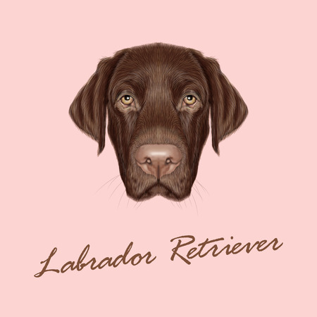 Vector illustrated portrait of Chocolate Labrador on pink background  イラスト・ベクター素材
