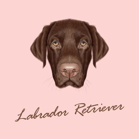 bata de laboratorio: Vector ilustrado retrato de Labrador del chocolate en el fondo de color rosa