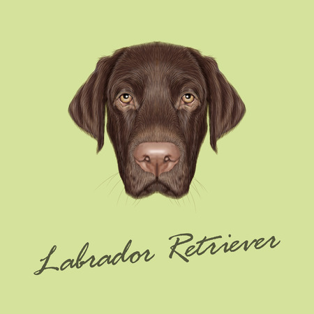 Vector illustrated portrait of Chocolate Labrador on green background.