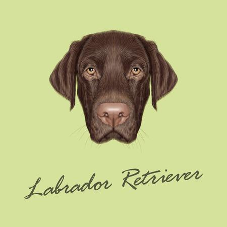 perro labrador: Vector ilustrado retrato de Labrador del chocolate en el fondo verde. Vectores