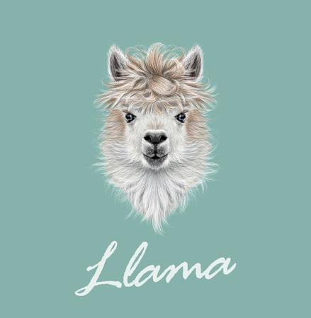 벡터 파란색 배경에 라마 또는 알파카의 초상화를 보여줍니다. 일러스트