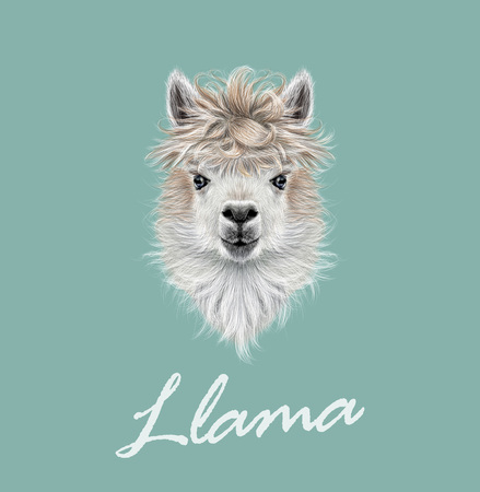 Vector illustrated portrait of Llama or Alpaca on blue background.