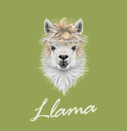 llama: Vector illustrated portrait of Llama or Alpaca on green background.