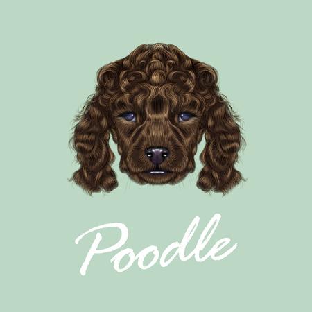 poodle: Vector illustrated portrait of brown dog on blue background. Illustration