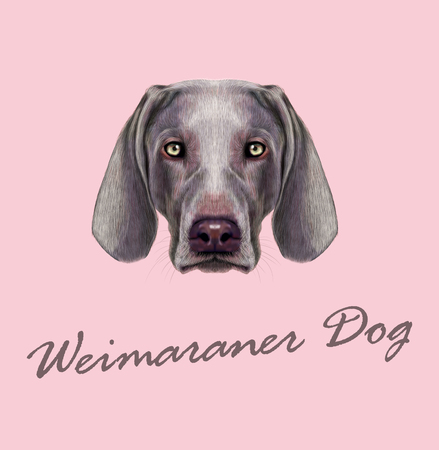 hunting dog: Vector illustrated Portrait of hunting dog on pink background. Illustration