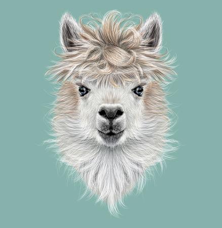 Geïllustreerd portret van de lama of Alpaca op een blauwe achtergrond. Stockfoto