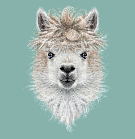 Illustrated portrait of Llama or Alpaca on blue background.