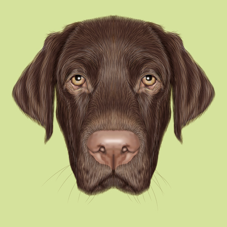 Illustrated portrait of Chocolate Labrador on green background.