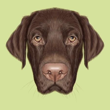 perro labrador: Retrato ilustrado de Labrador del chocolate en el fondo verde.