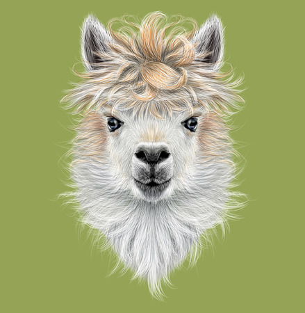 llama: Illustrated portrait of Llama or Alpaca on green background Stock Photo