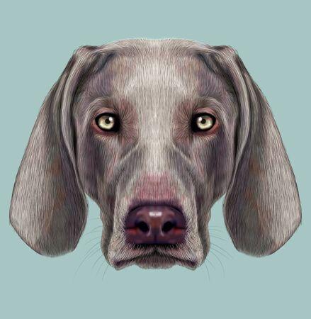 hunting dog: Illustrated Portrait of hunting dog on blue background.