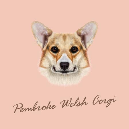 pembroke welsh corgi: Cute red dog  face on pink background Illustration
