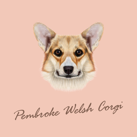 Cute red dog  face on pink background Illustration