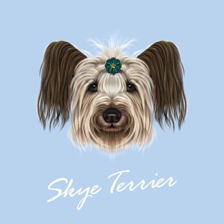 scottie: Cute face of dog on blue background. Illustration