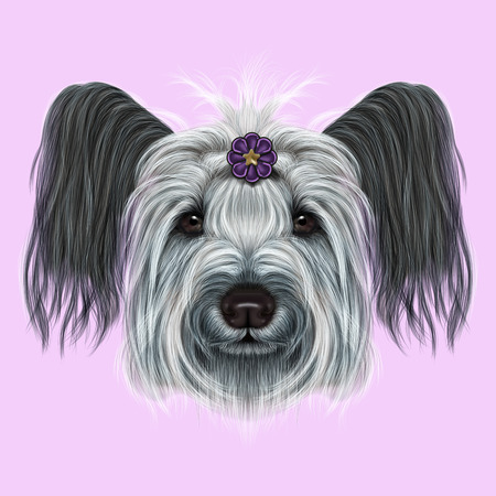 scottie: Cute face of dog on pink background.