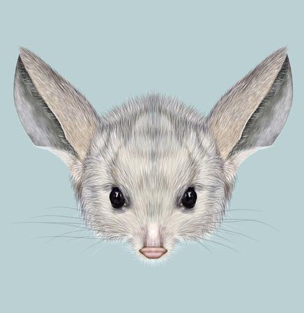 mammal: Cute grey face of desert small mammal on blue background
