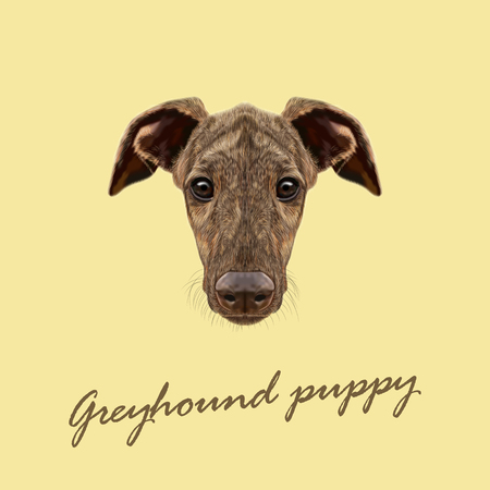 fawn: Cute face of fawn brindle domestic dog on yellow background Illustration