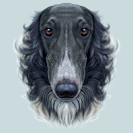 Cute face of black greyhound domestic dog on blue background.
