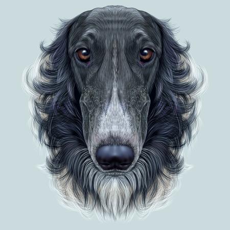 borzoi: Cute face of black greyhound domestic dog on blue background.
