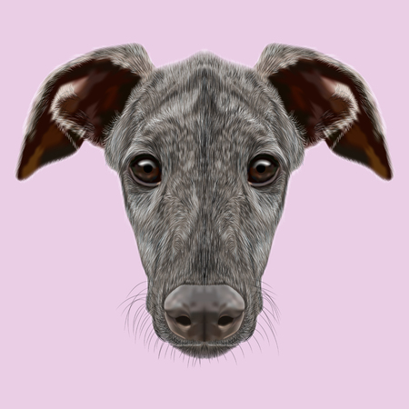brindle: Cute face of dark brindle domestic dog on pink background Stock Photo