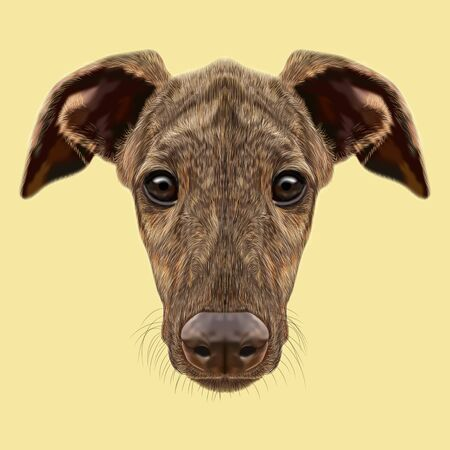 brindle: Cute face of fawn brindle domestic dog on yellow background Stock Photo