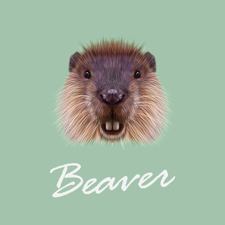 aquatic: Cute face of aquatic fluffy rodent on green background. Illustration