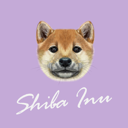akita: Cute red face of domestic dog on violet background.