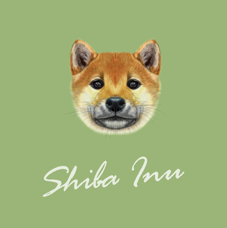 spitz: Cute red face of domestic dog on green background.