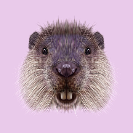 rodent: Cute face of aquatic fluffy rodent on pink background.
