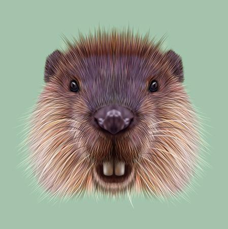 녹색 배경에 수생 무성 한 쥐의 귀여운 얼굴입니다. 스톡 콘텐츠