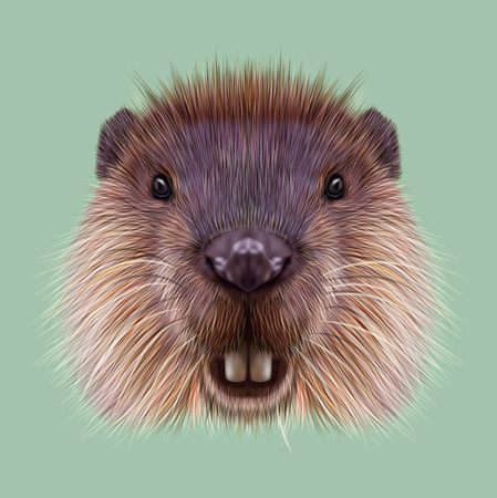 rodent: Cute face of aquatic fluffy rodent on green background. Stock Photo