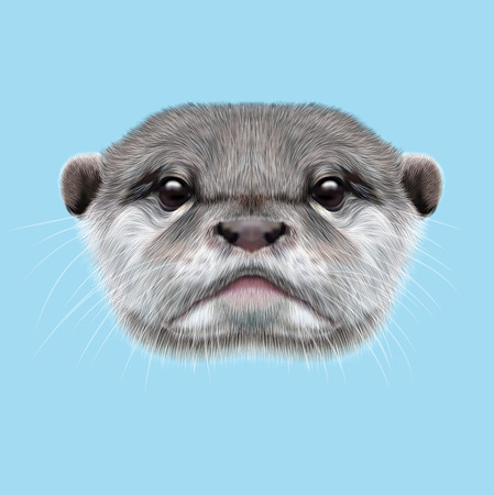 aquatic: Cute face of  aquatic Otter on blue background.