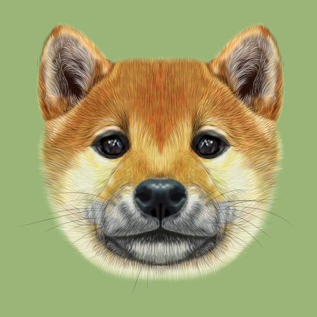 akita: Cute red face of domestic dog on green background.