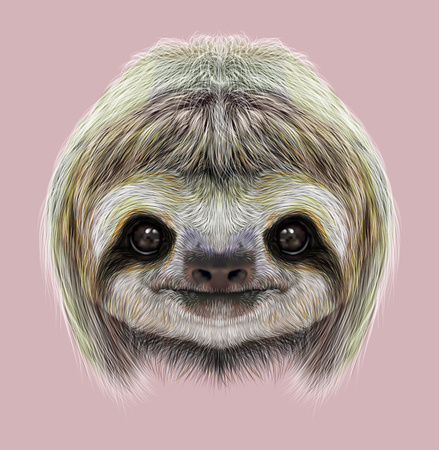 Cute face of tropical Three-toed Sloth on pink background.