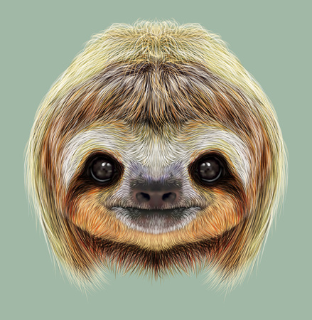 Cute face of tropical Three-toed Sloth on green background.